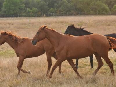 Riding ring and breeding farm